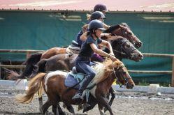 sarl ferme equestre du piroué