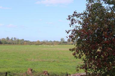mom'art